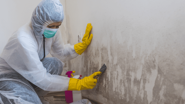 Guide to Mold Remediation Consultations
