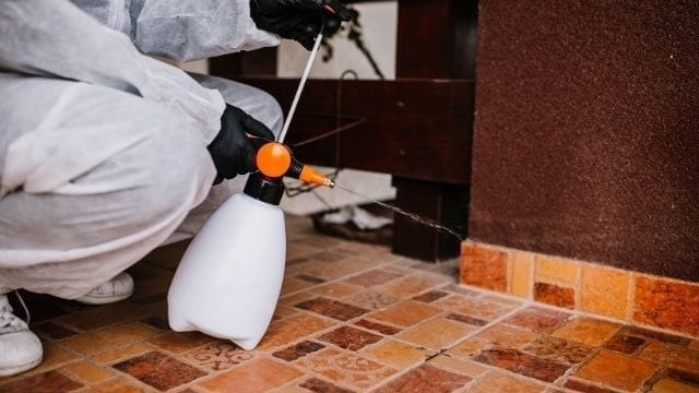 Cost of cleaning services