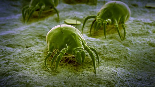 mold-mites