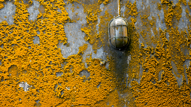 Orange-mold-mold-mites